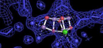 Role of Oxygen in Polymerizing Cargo Inhibition – Shakhawet Hossain (17)